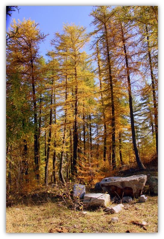 Un automne en OR