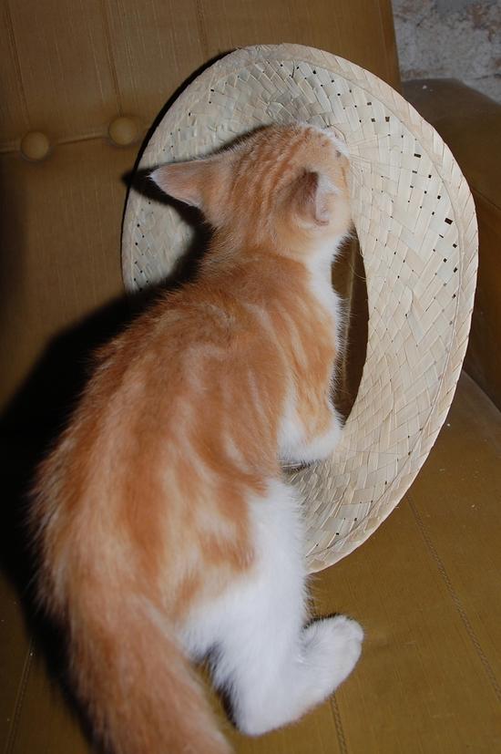 chaton12juilletk