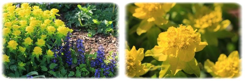Un tourbillon de fleurs