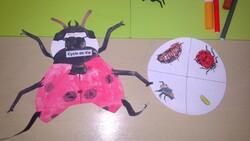Les insectes - LA COCCINELLE