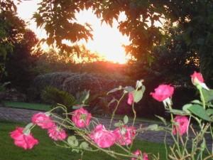 Jardin-juin.jpg