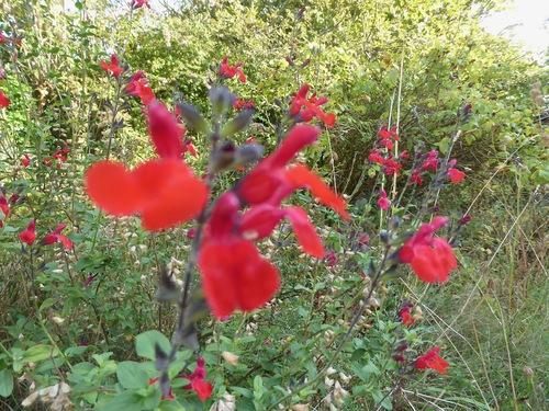 Nouvel article pour honorer le nouveau blog d'automne, merci Micromick.