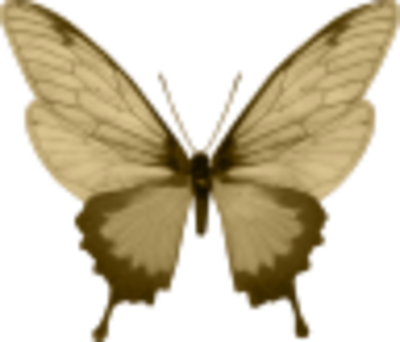 Papillon  (4)