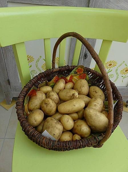 pommes de terre 26--05-11