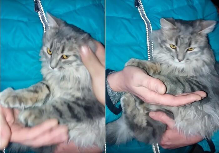 CHANTOUVIVELAVIE : Russie : un chat piégé dans la glace par -35°C a été sauvé  par un couple