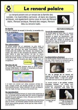 Texte documentaire: le renard polaire