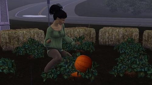 Chapitre 101: L'automne est là...