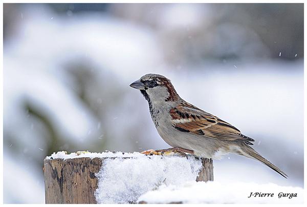 Les très belles photos d'oiseaux en hiver de Jean-Pierre Gurga