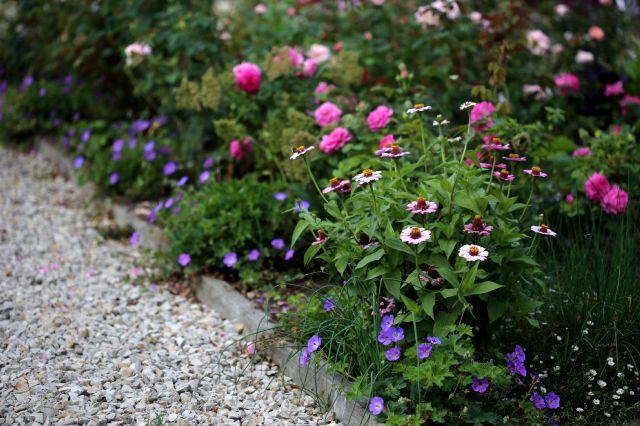 Plantes de bordure (1/2)