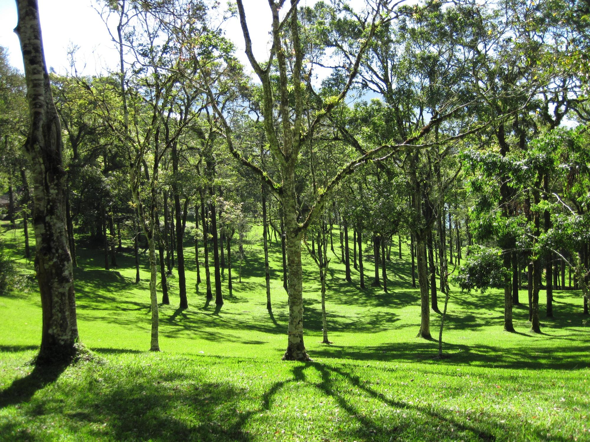 Jardin botanique de Bali