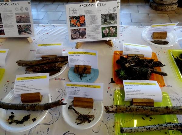 L'exposition de champignons présentée à la fin du Congrès National de Mycologie 2014 à Châtillon sur Seine