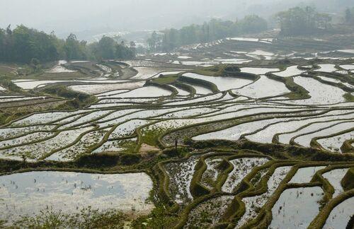 rizières en terrasse sous le soleil