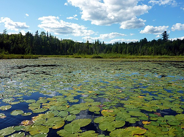 Mauricie-Lac-Loutre-3.jpg