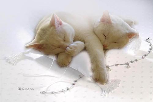 Le chat, l'être le plus beau...