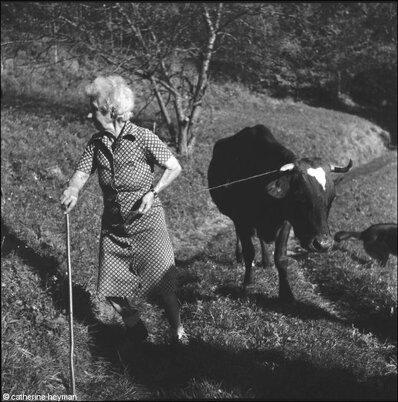 02 - Des vaches suite