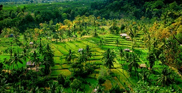 Iles indonésiennes ...