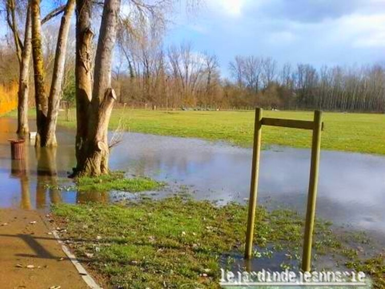 que d'eau pour cet hiver 2014-2015 mais très peu d'inondation,Cornuta et pensèes a Langon(Gironde)
