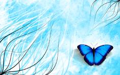 Fleurs, Papillon - papier scrap