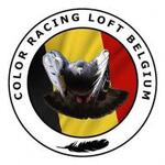 LOT N°53 : COLOR RACING LOFT BELGIUM DE SCHAFFEN-DIEST