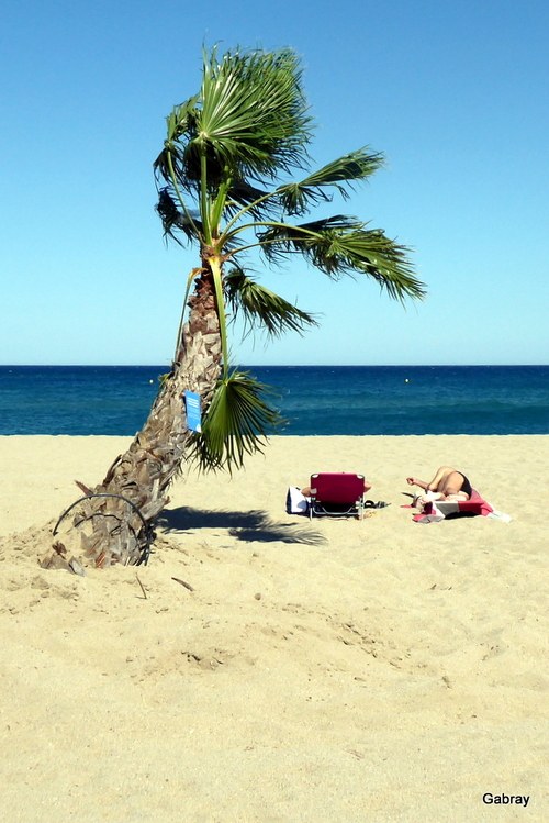Le Barcarès: la plageaux palmiers !