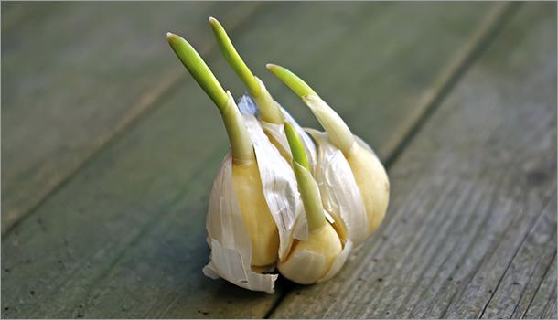 légumes faire repousser