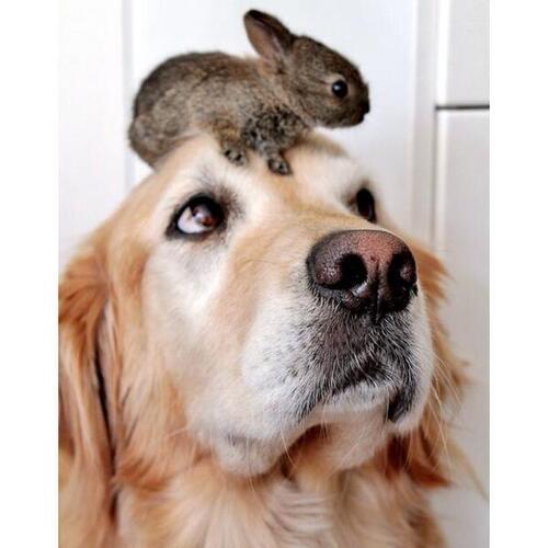 Je communique avec les animaux