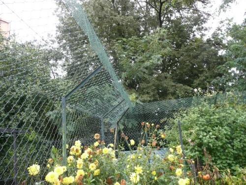 jardin-securise-pour-les-chats-3.JPG