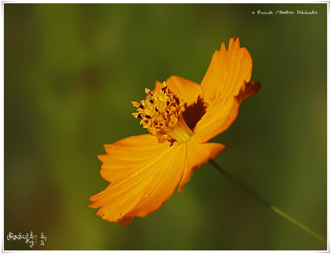 Douceur des fleurs en jachère