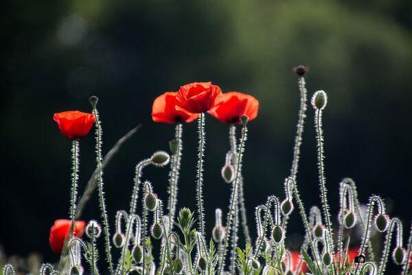 C'est toujours le printemps avec les superbes photos de Claudie Hardouin !