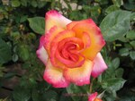 Photos de Roses