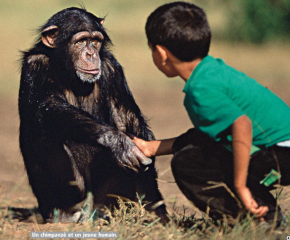 http://lancien.cowblog.fr/images/Animaux2/humainchimpanze.png
