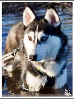 Mishka (8 mois)