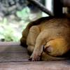 En plein sommeil ! - Photo : Anne