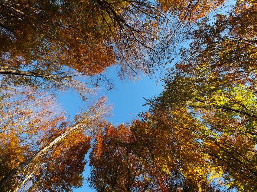 Visions D'automne