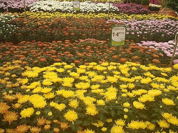 fleurs d automne 010