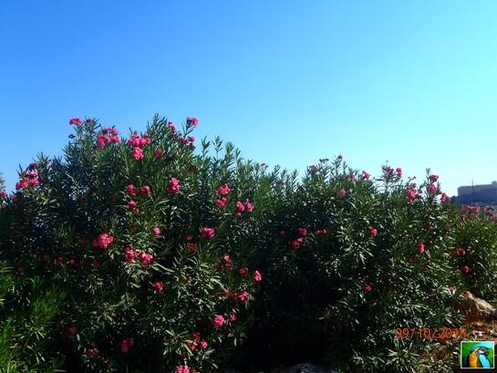 Rhodes : Octobre 2018 : Lindos 2/2
