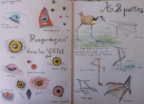 oiseaux, becs, pattes... en aquarelle