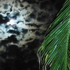 Une nuit sur la plage - 1 - Photo : Jenny Olivier