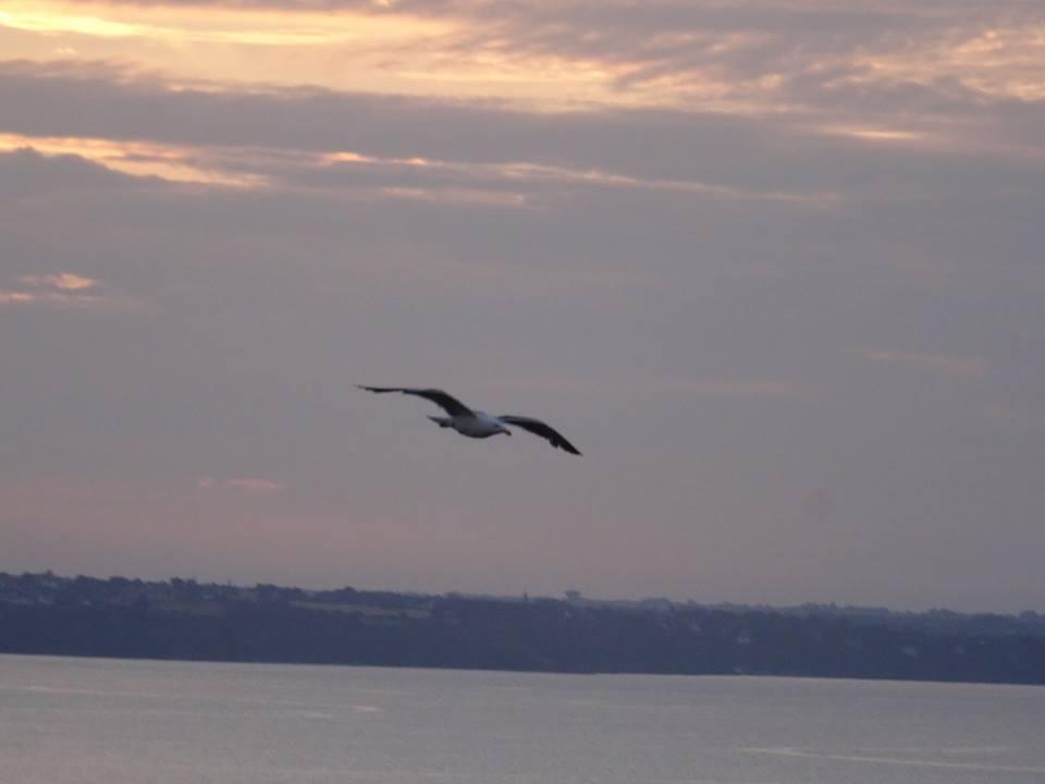 L'image contient peut-être: ciel, oiseau, nuage, plein air, nature et eau