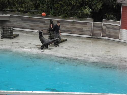Notre sortie au zoo de la flèche ...