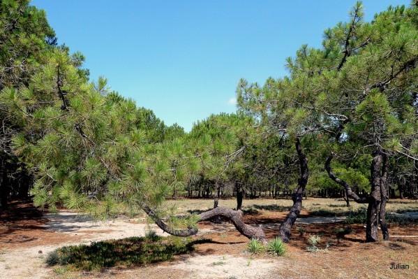 Q01 - Les pins