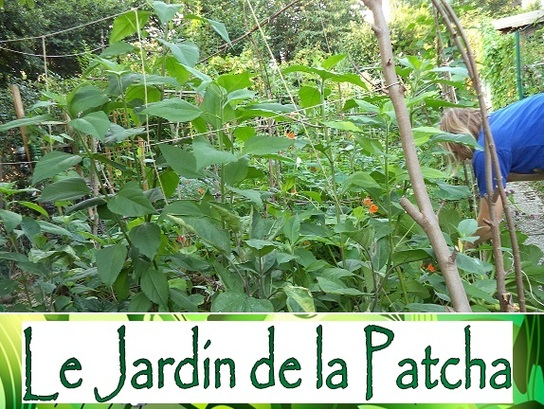 Projet : Le jardin de la Patcha