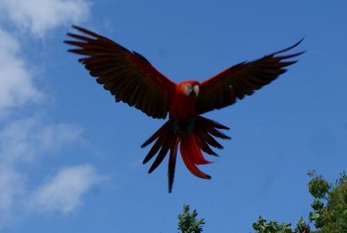 Chez Mildéfis n° 206 plume d'oiseau