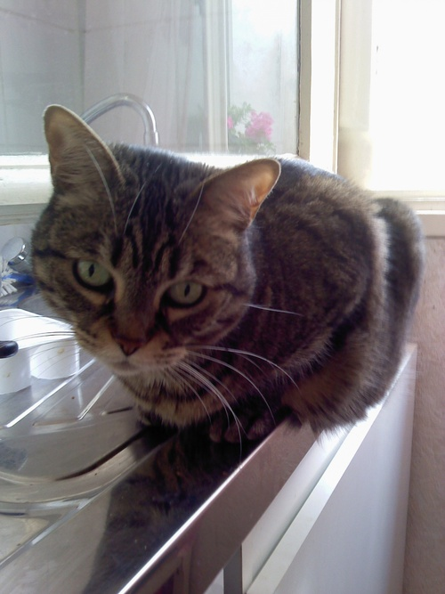 """Hors concours : ma participation à la communauté """"J'aime les chats""""."""