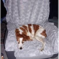 Emy qui a piqué le fauteuil à son papou