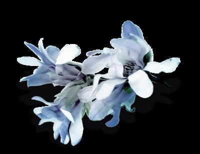 ♥ Les Fleurs d'Hélène ♥