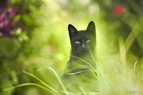 Eclair noir