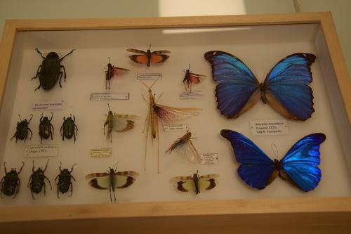 Collections de la fac de sciences