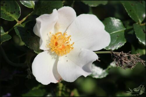 Portes Ouvertes 'Parfums D'Automne' Chez Filroses(4)