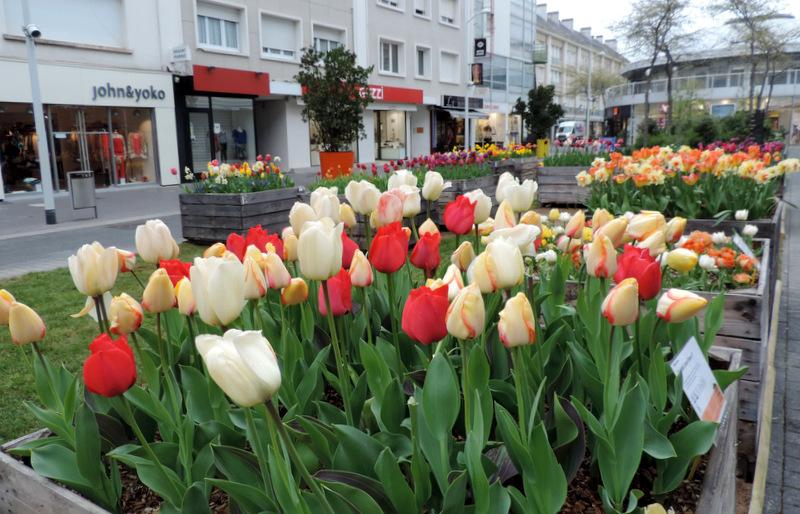 Centre-ville en fleurs...